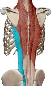 Iliocostal lumbar